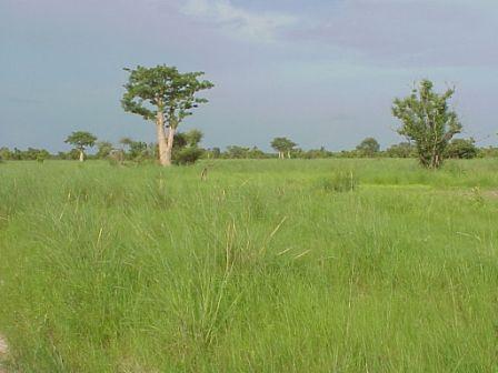Photos des lieux Savane